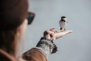 uccello veternario