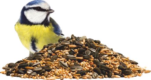 cibo uccellini