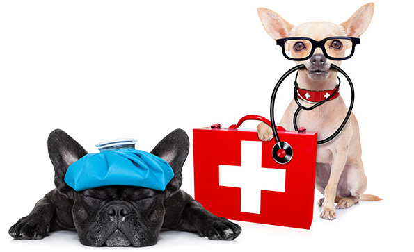 urgenze veterinarie saronno
